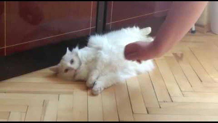 Бешеный глухой кот 2
