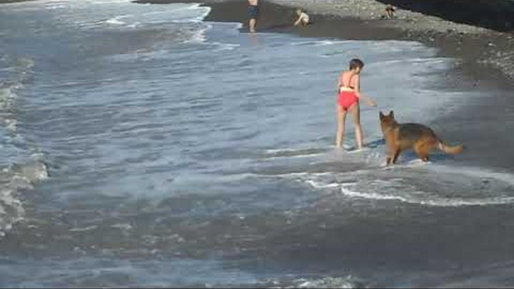 Сочи. Море волнуется... Бархатный сезон продолжается!!! (3 ноября 2018 г.)