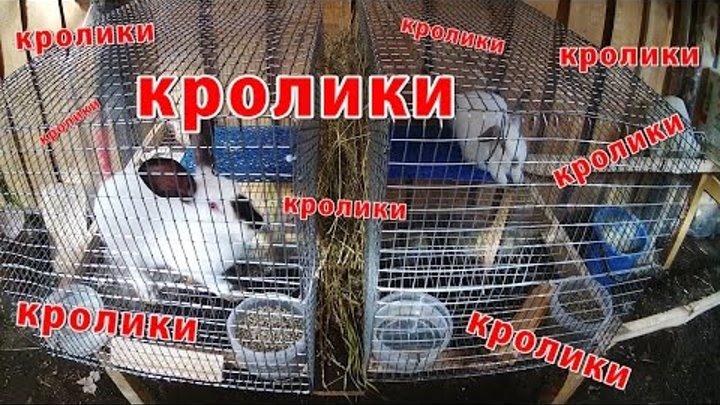 про село - как сделать клетки для кроликов своими руками + бройлеры // Жизнь в деревне