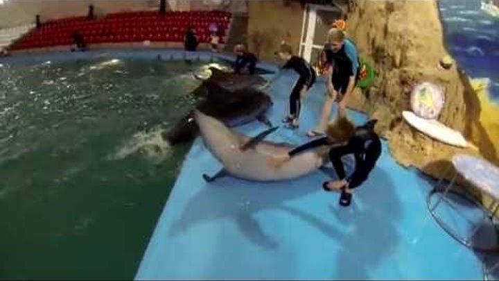 Дети очень любят дельфинов а дельфины детей!!!