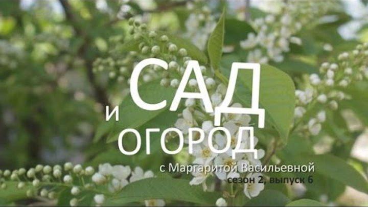 Сад и огород с Маргаритой Васильевной – сезон 2, выпуск 6