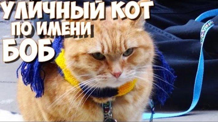 Уличный кот по имени Боб/мнение/дата выхода фильма/a street cat named bob