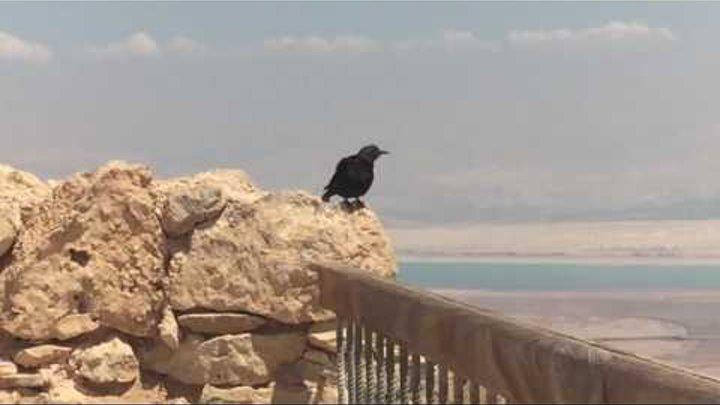 Вдоль Мёртвого моря, в древнюю крепость Масада