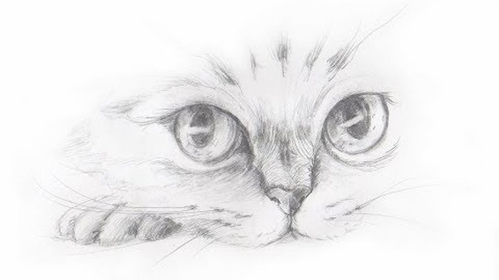 Друзьям, крутые рисунки карандашом коты