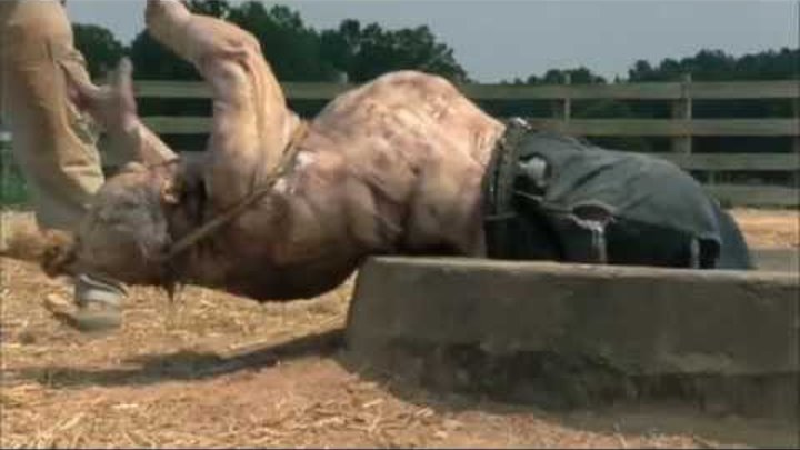 Ходячие мертвецы 2 сезон 4 серия HD трейлер / The Walking Dead