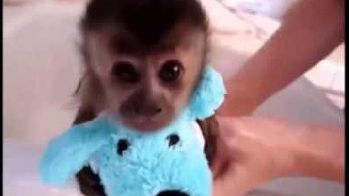 приколы с обезьянами часть 9 ! самое популярное видео с приколами !