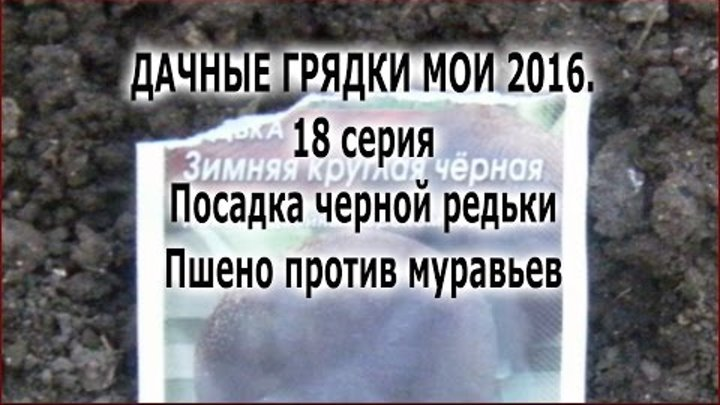 ДАЧНЫЕ ГРЯДКИ МОИ 2016. 18 серия. Посадка черной редьки. Пшено против муравьев.