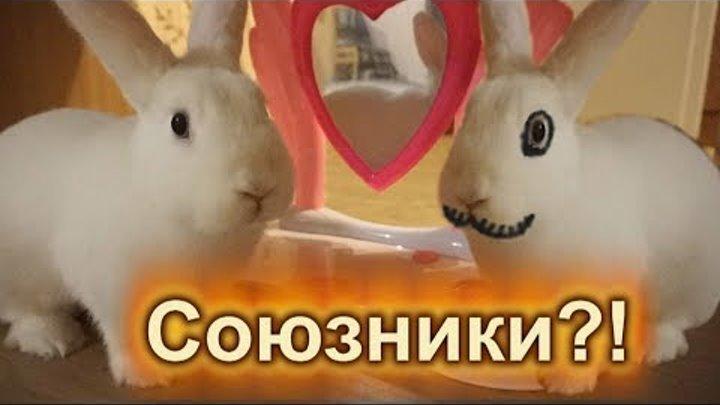 БАКУ- пожиратель снов и КРОЛИК Ляля стали союзниками!