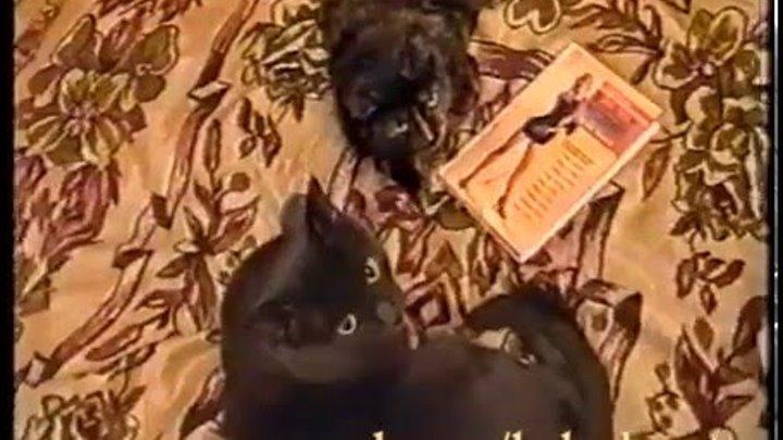 книга как соблазнить кота