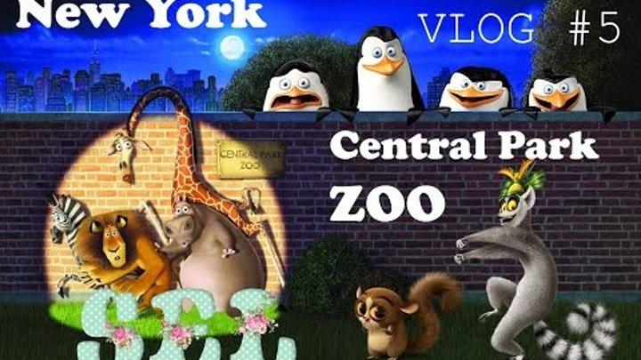 VLOG#5 Зоопарк Центрального Парка в Нью Йорке Central Park Zoo Мадагаскар
