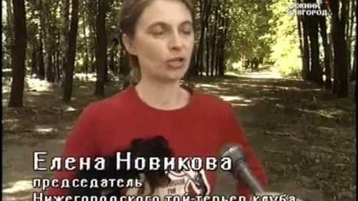 Русские тои в Нижнем Новгороде, 2007 год