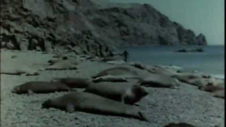 Жак Ив Кусто серия 6.2 Возвращение морских слонов.