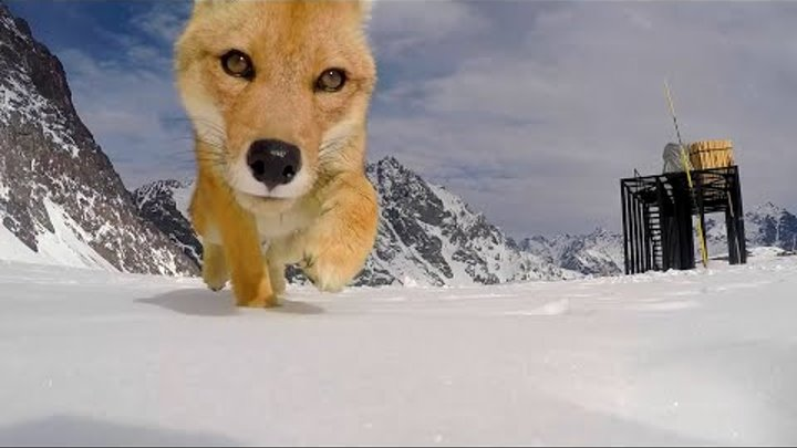 Fox Steals GoPro