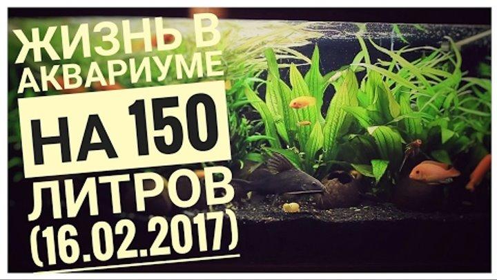 МОЙ АКВАРИУМ И ЕГО ОБИТАТЕЛИ! 150 ЛИТРОВ! Сезон 1 Серия 2