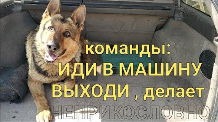 Моя собака понимает, выполняет команды состоящие из двух слов. Порода немецкая овчарка.