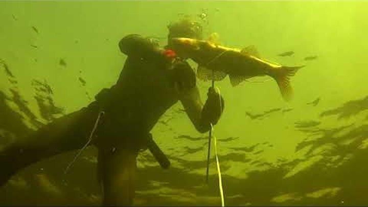 Лучшие моменты. Подводная охота на судака. Дуплет.