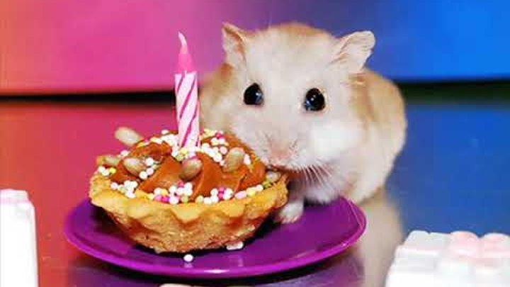 С именем зарема открытка с днем рождения тебя, днем рождения