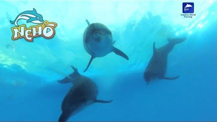 Dolphinarium Nemo Dolphins Bay Phuket