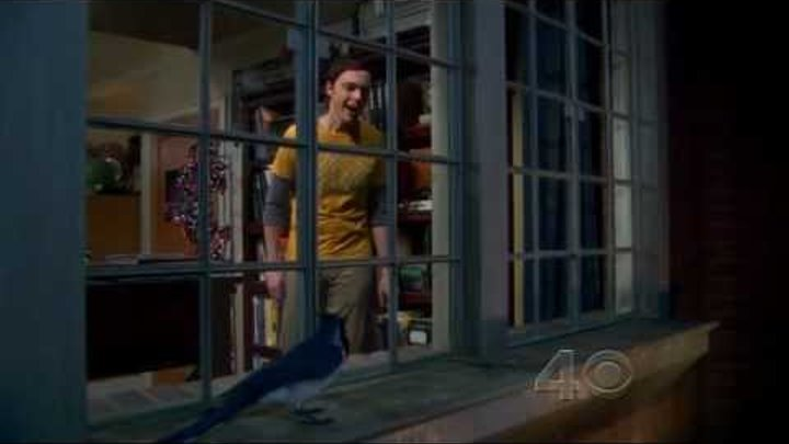The Big Bang Theory S05E09 Sheldon Bird On Ledge