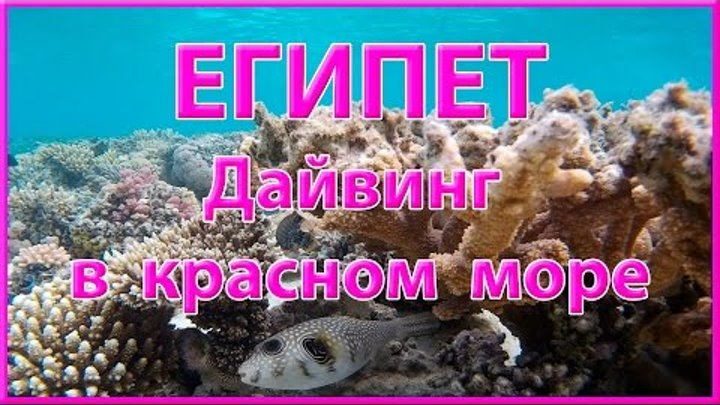 ЕГИПЕТ Дайвинг в Красном море ROSMAIT PRESENTS