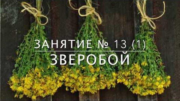 Школа травоведения - Занятие № 13(1) ЗВЕРОБОЙ с точки зрения этноботаники