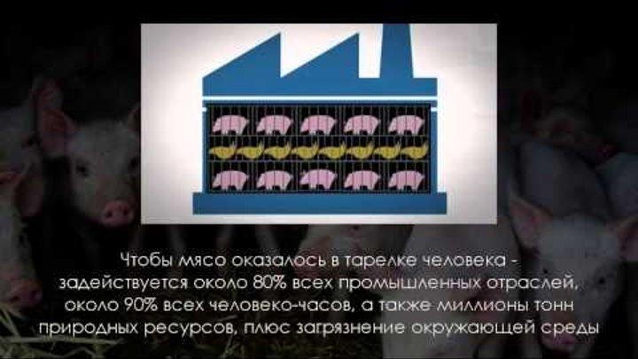 """Фильм """"Мясоедение - это КАННИБАЛИЗМ"""""""