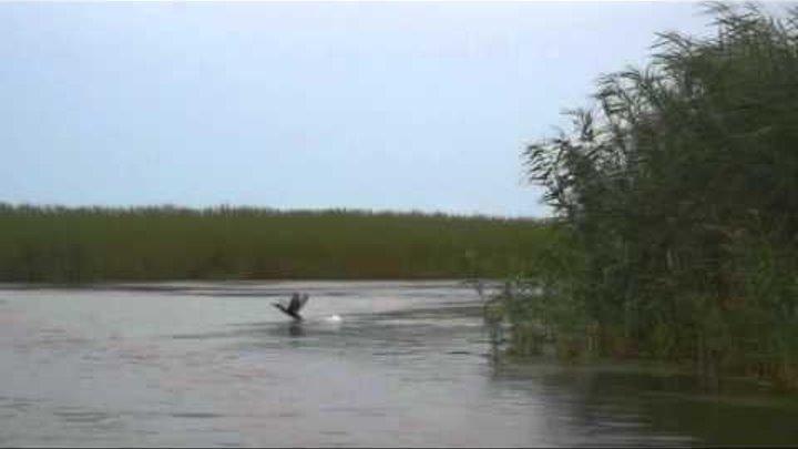 Дельта Волги- Орнитофауна
