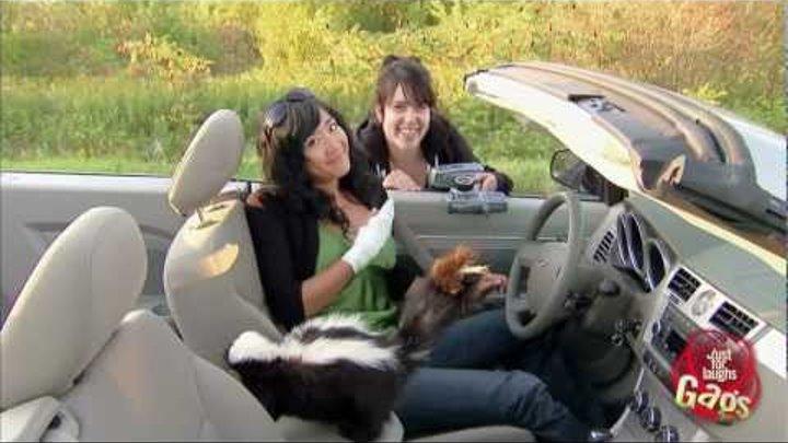 Skunk In Car Prank