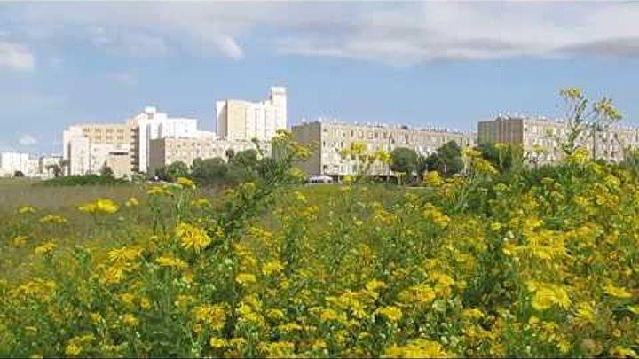 Солнце,море и осенние цветы!!!Кирьят-Ям.Израиль.Kiryat-Yam. Israell