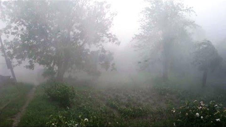 Ливень. Стихия Разбушевалась. Гром. Молнии. Проливной Дождь