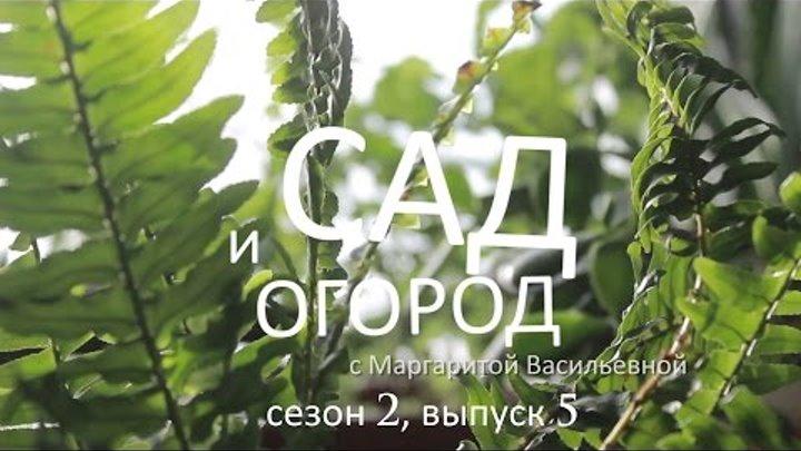 Сад и огород с Маргаритой Васильевной – сезон 2, выпуск 5