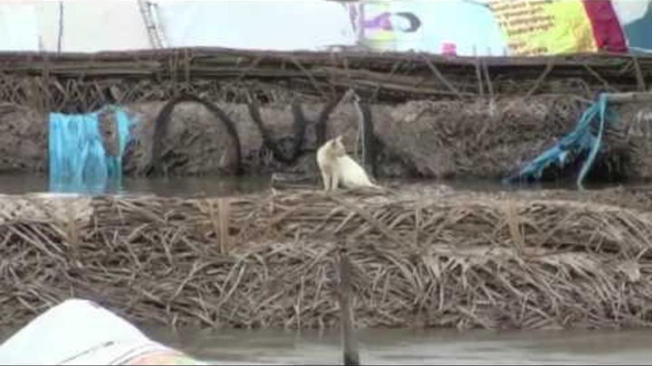Chennai Under Flood,Day 2 - MIOT Hospital Has Become A Island - Red Pix 24x7