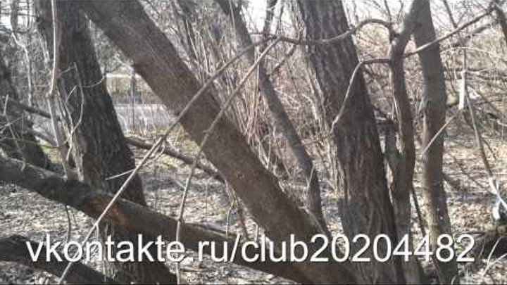 Радиация в подмосковье Radiation in Moscow region