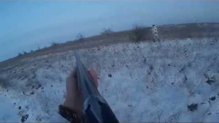 Охота на фазана. Фазан затаился в снегу. Ноябрь 2014 год. Выпуск #3