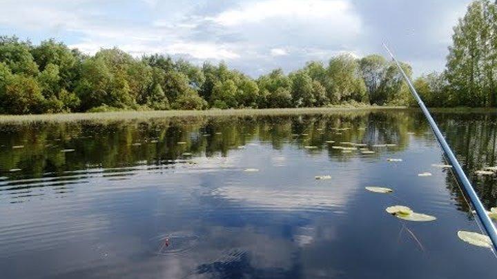 Рыбалка, озеро, краснопёрка, окунь, плотва