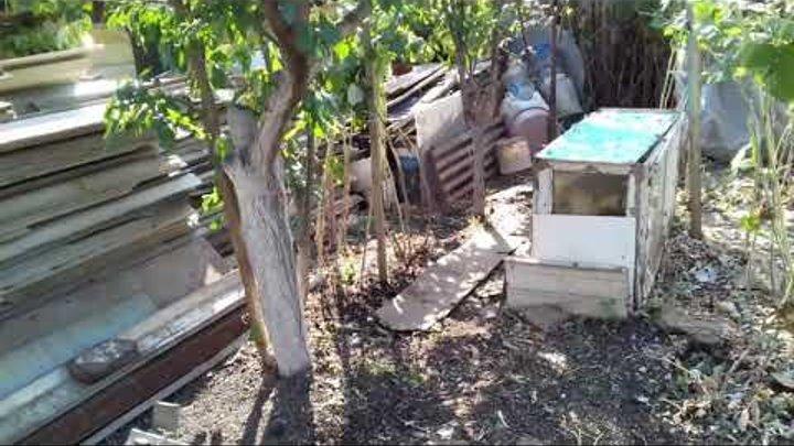 огород обновляется,а осенние работы только начинаются