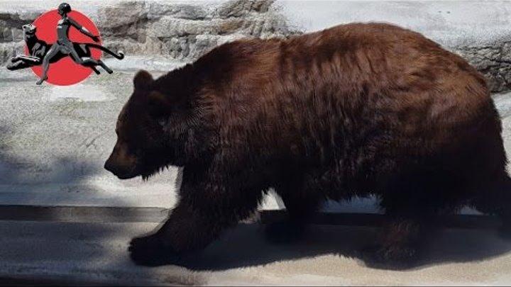 Медведи в Николаевском зоопарке. Белый и бурый медведь / Nikolaev Zoo Bears
