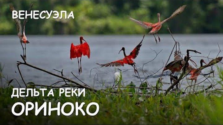 Мир Приключений - Дельта реки Ориноко. Венесуэла. Orinoco delta. Venezuela.