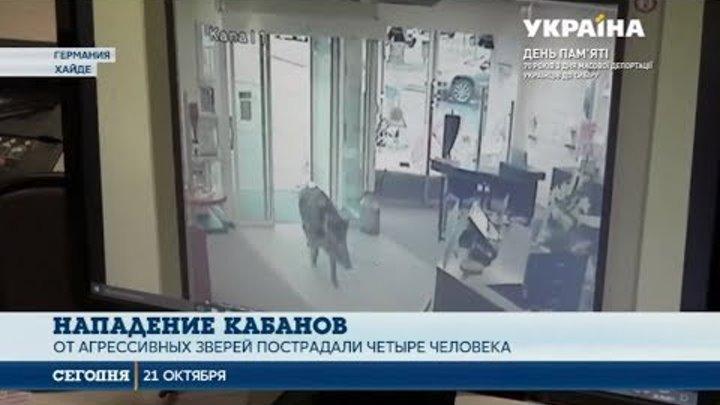 Два диких кабана напали на людей в Германии