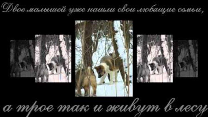 Лесная братва. 3 щенка очень хотят Жить.mp4