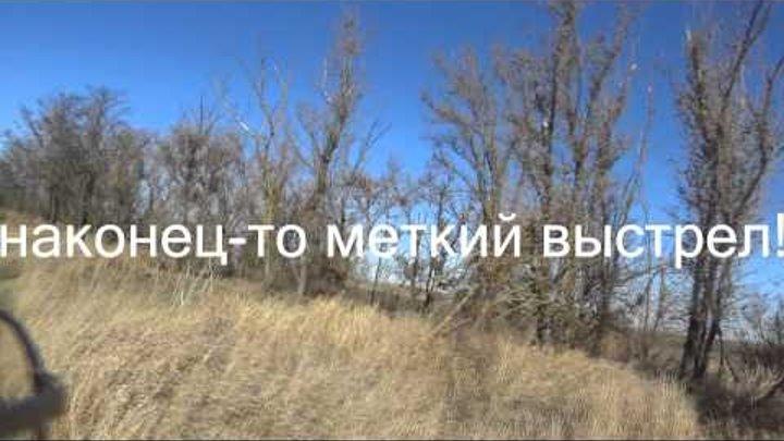 охота на фазана (Крым 2014)