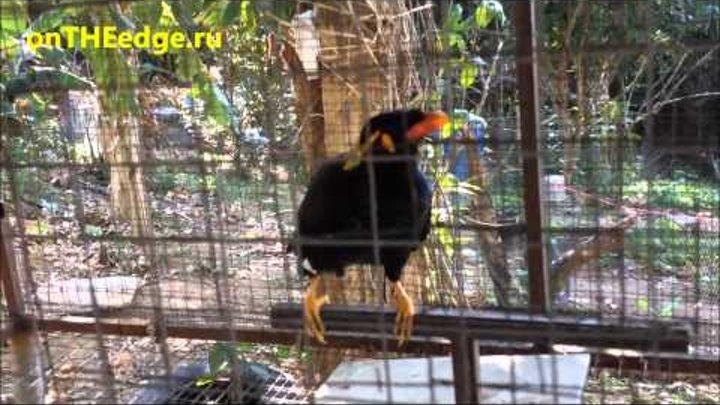 Птица в клетке говорит человеческим голосом