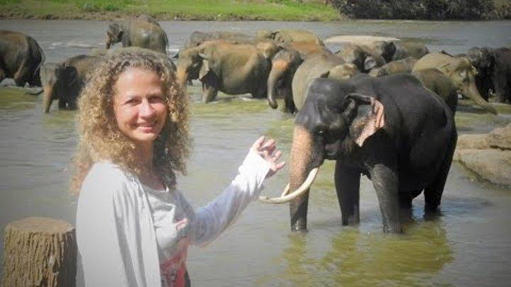 Питомник слонов на Шри Ланке