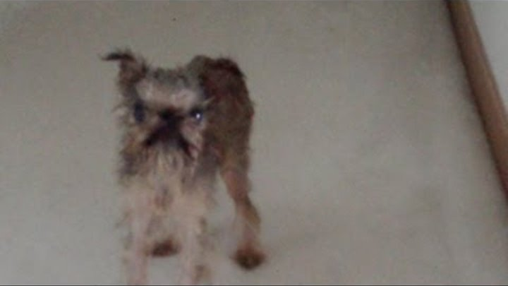 angry wet dog video