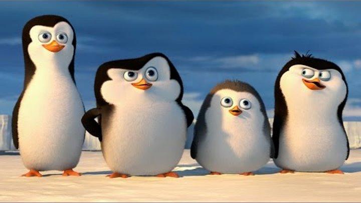 "DreamWorks: PINGWINY Z MADAGASKARU - film dokumentalny: ""Pingwiny z Antarktydy"" - POLSKA"