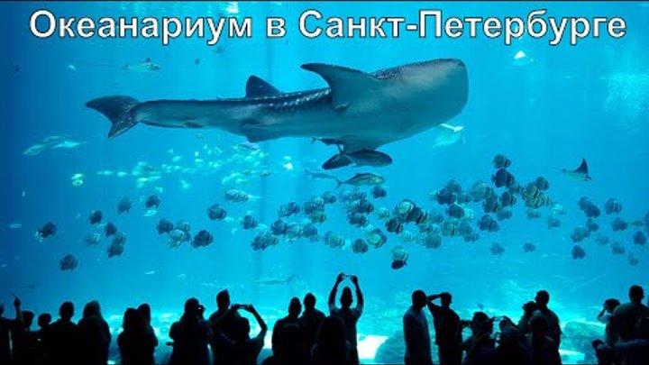 Океанариум Санкт-Петербурга «подводный музей»