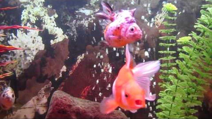 мои золотые рыбки 01.03.2011..MOV