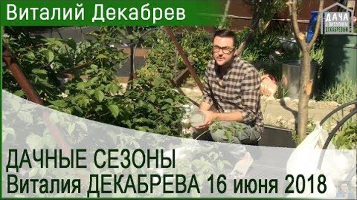 Дачные сезоны с Виталием Декабревым. 16 июня 2018