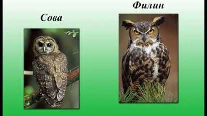 """Проектная работа """"Такие похожие, но разные"""", Козлова Полина 2 класс"""