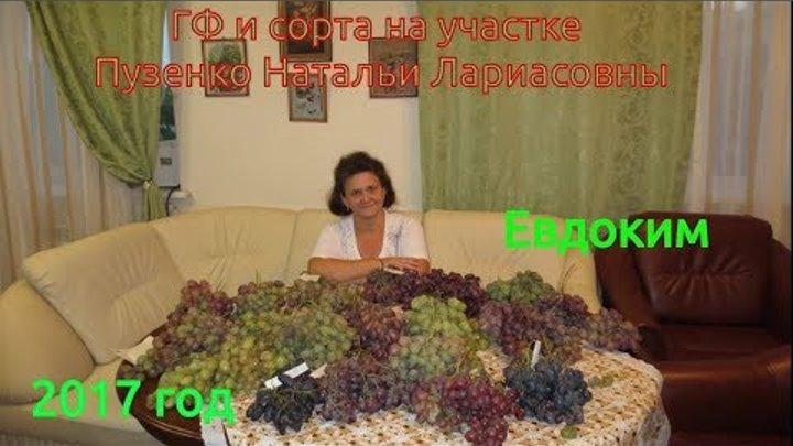 Евдоким гибридная форма винограда раннего срока созревания (Пузенко Наталья Лариасовна)